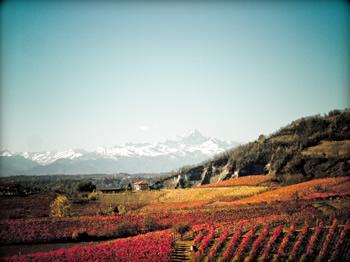 Het wijnwonder gebeurt niet in de kelder maar in de natuur
